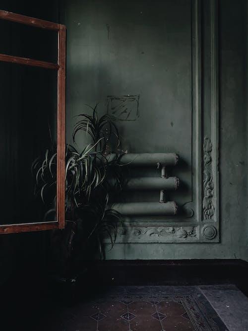 Indoor Plant Near Wall