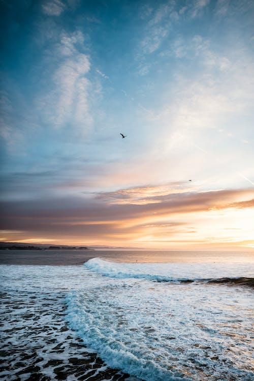 Free stock photo of beach, ocean, sunrise