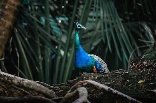 Imagine de stoc gratuită din animal, aviar, faună sălbatică, fotografie de animale