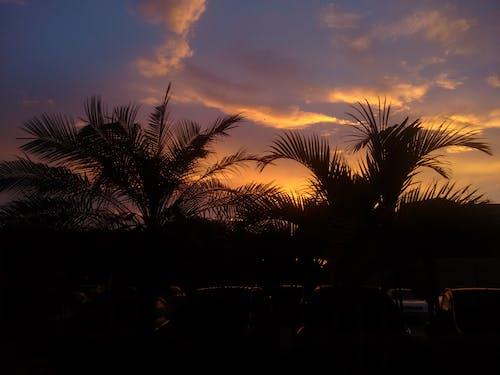 Darmowe zdjęcie z galerii z natura, tropikalny, wschód słońca