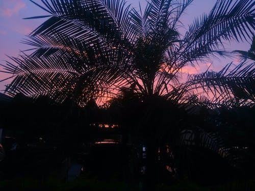 Darmowe zdjęcie z galerii z czerwone niebo, natura, piękny, słoneczny