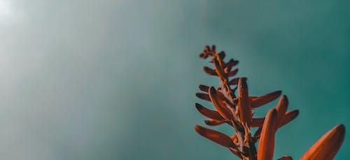 Fotobanka sbezplatnými fotkami na tému abstraktná fotografia, Adobe Photoshop, fotografia prírody, fotografovanie v exteriéri
