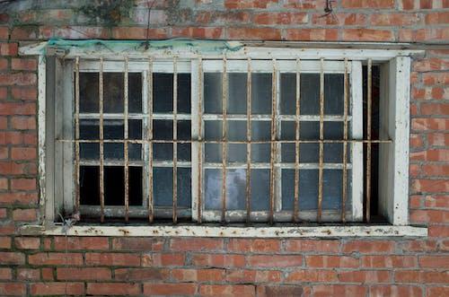 Free stock photo of wall, window