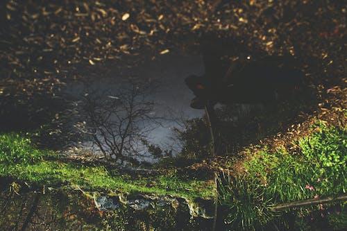 Foto d'estoc gratuïta de a l'aire lliure, alba, arbres, boscos