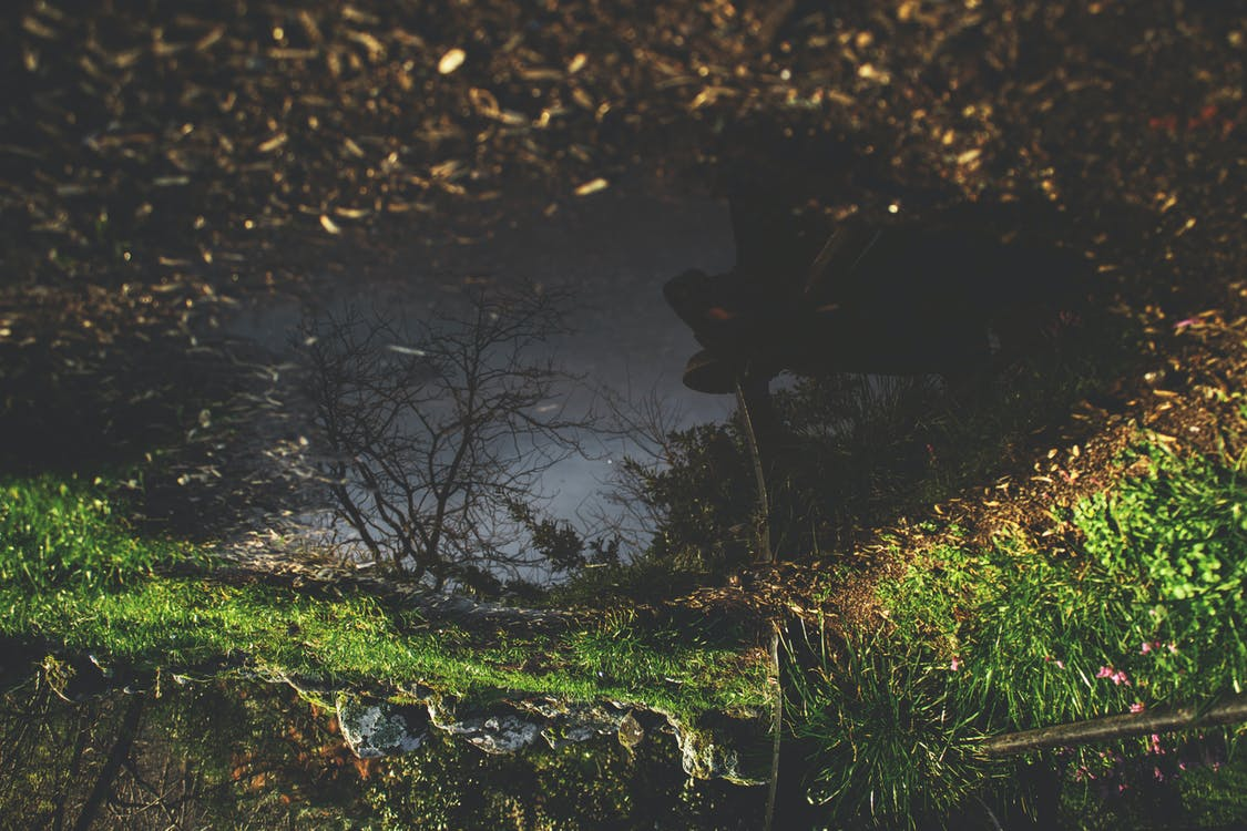 alba, arbres, boscos