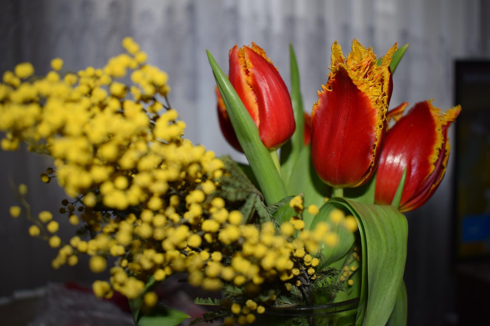 пониманием относимся картинки с мимозами и тюльпанами есть