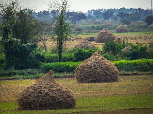 Free stock photo of agriculture, husk, india, nature