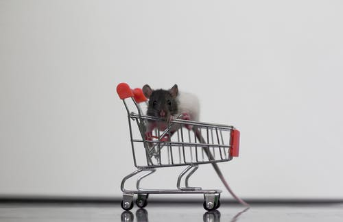 Free stock photo of black and white rat, cart, mouse, pest