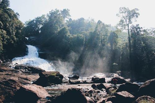 博帕氏菌, 斯里蘭卡, 斯里蘭卡瀑布, 旅行目的地 的 免費圖庫相片
