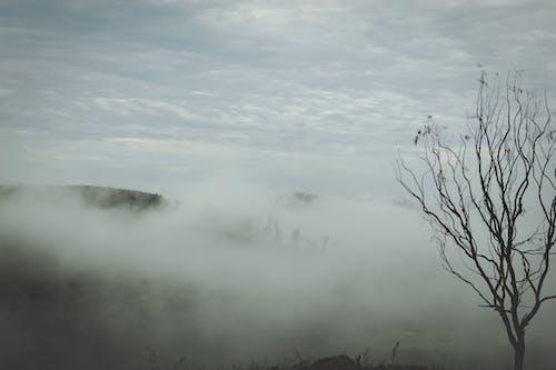 คลังภาพถ่ายฟรี ของ ต้นไม้, พร่ามัว, พื้นที่ภูเขา, มัว