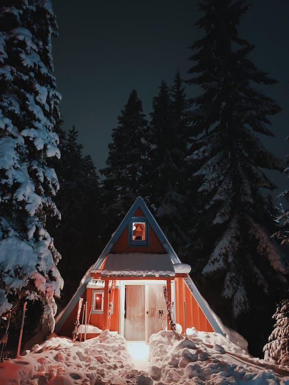 Fotos de stock gratuitas de al aire libre, amanecer, arboles en la noche