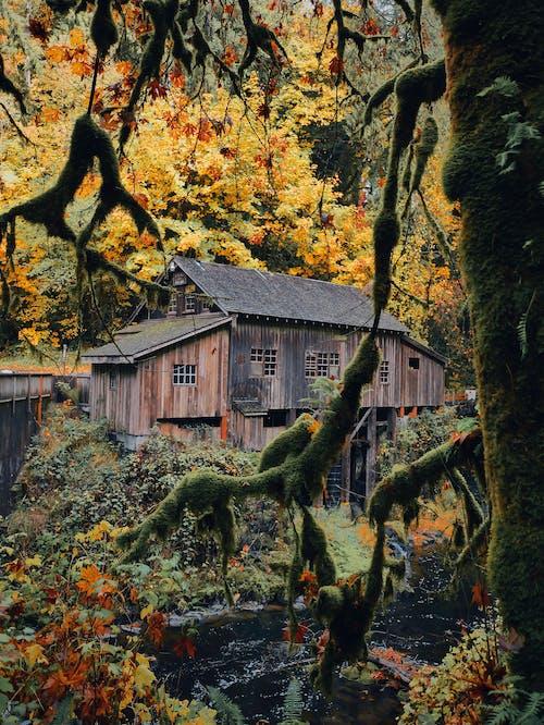 Imagine de stoc gratuită din acasă, arbore, arhitectură, artă