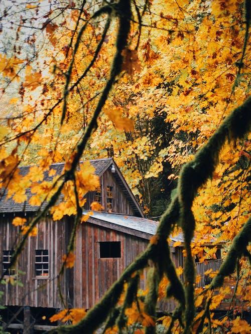 Foto stok gratis alam, alami, bangsa, bangunan