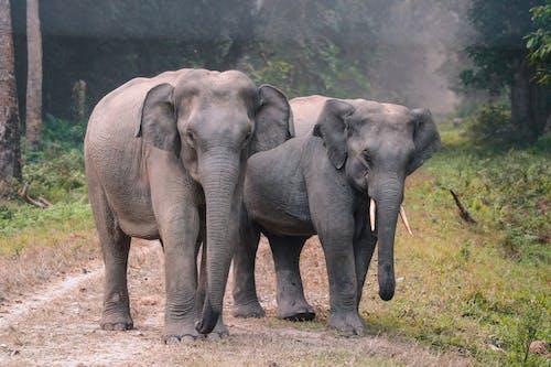açık hava, büyük, çim saha, fil hortumu içeren Ücretsiz stok fotoğraf