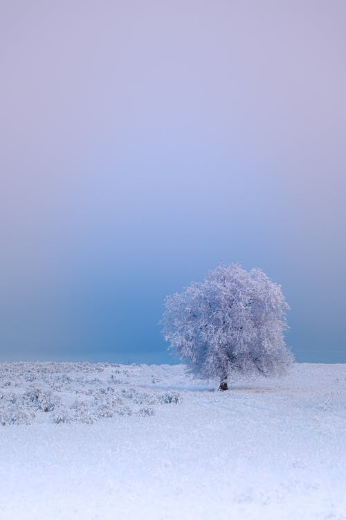 Tree Covered by White Snow