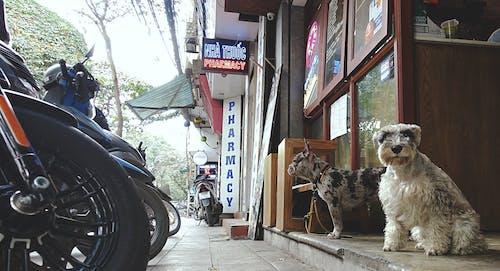 Základová fotografie zdarma na téma Hanoj, psi, Vietnam