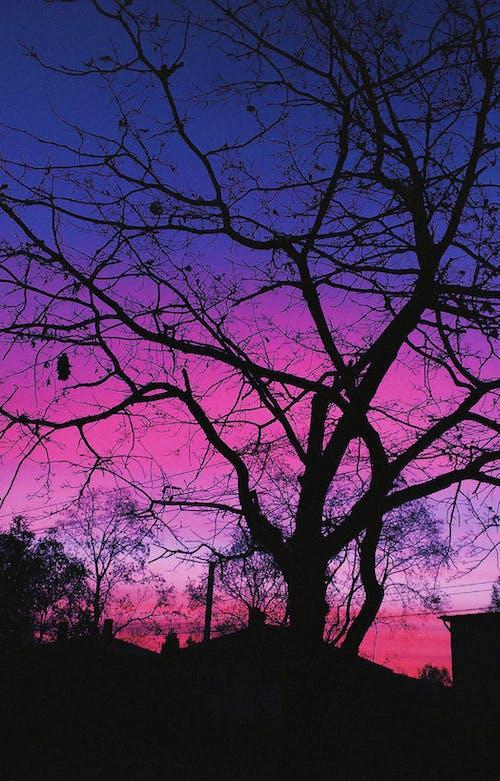 คลังภาพถ่ายฟรี ของ ข้างนอก, ต้นไม้, ตะวันลับฟ้า, ภูมิทัศน์
