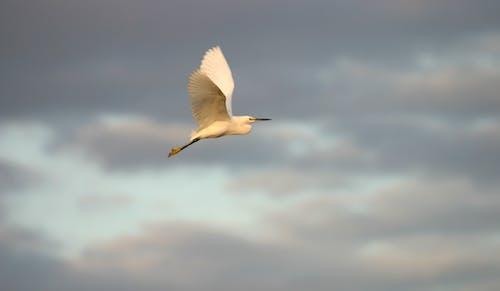 구름, 깃털, 날개, 날으는의 무료 스톡 사진