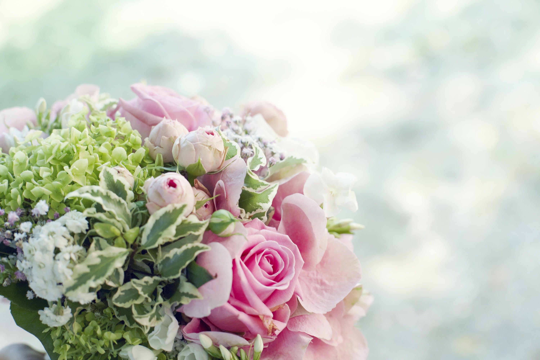 Kostenloses Stock Foto zu blütenblätter, verschwimmen, blätter, blume