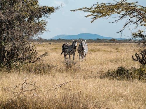 Immagine gratuita di animale, campo d'erba, erba, erbivoro