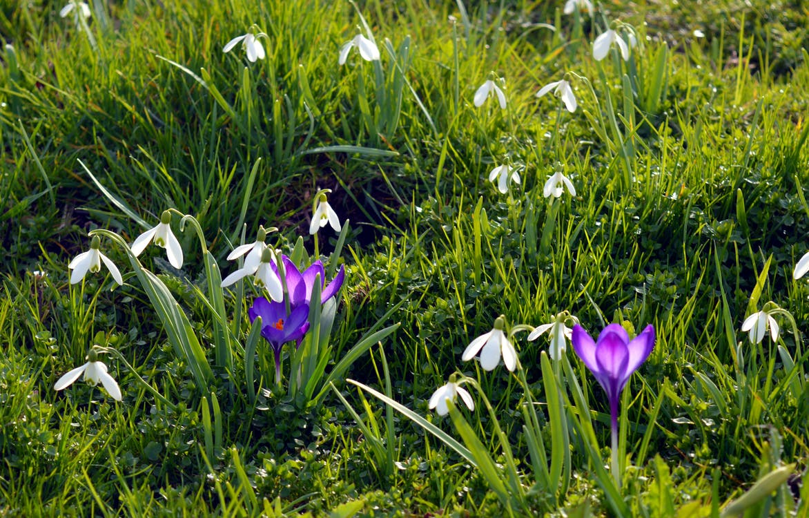 Bed of Purple and White Petaled Flowers