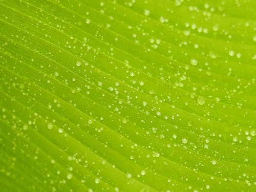 Close-Up Photo of Leaf With Droplets of Water