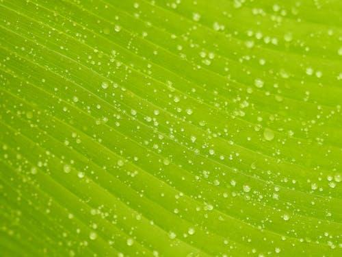 水滴と葉のクローズアップ写真