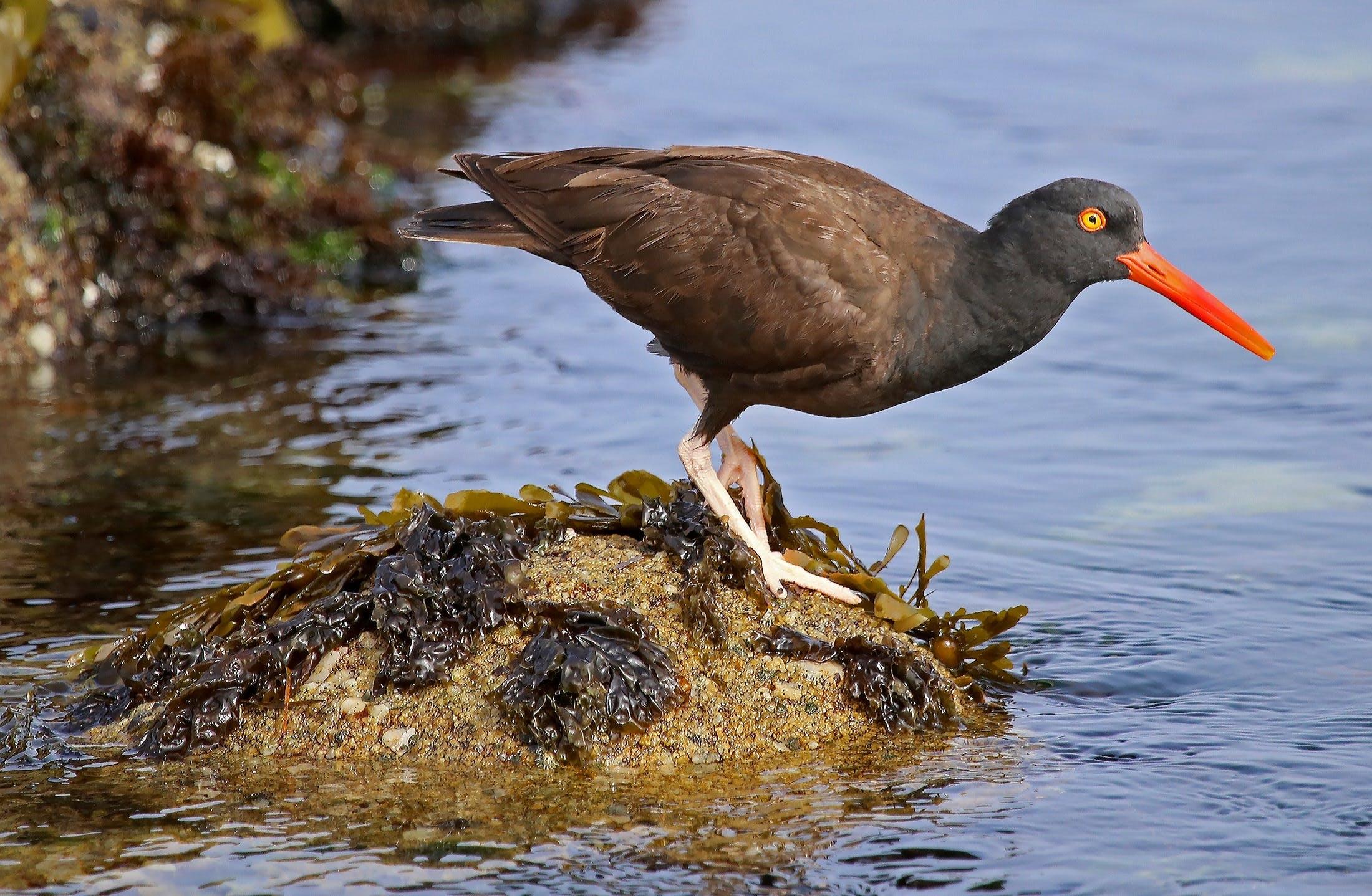 Free stock photo of nature, bird, water, coast