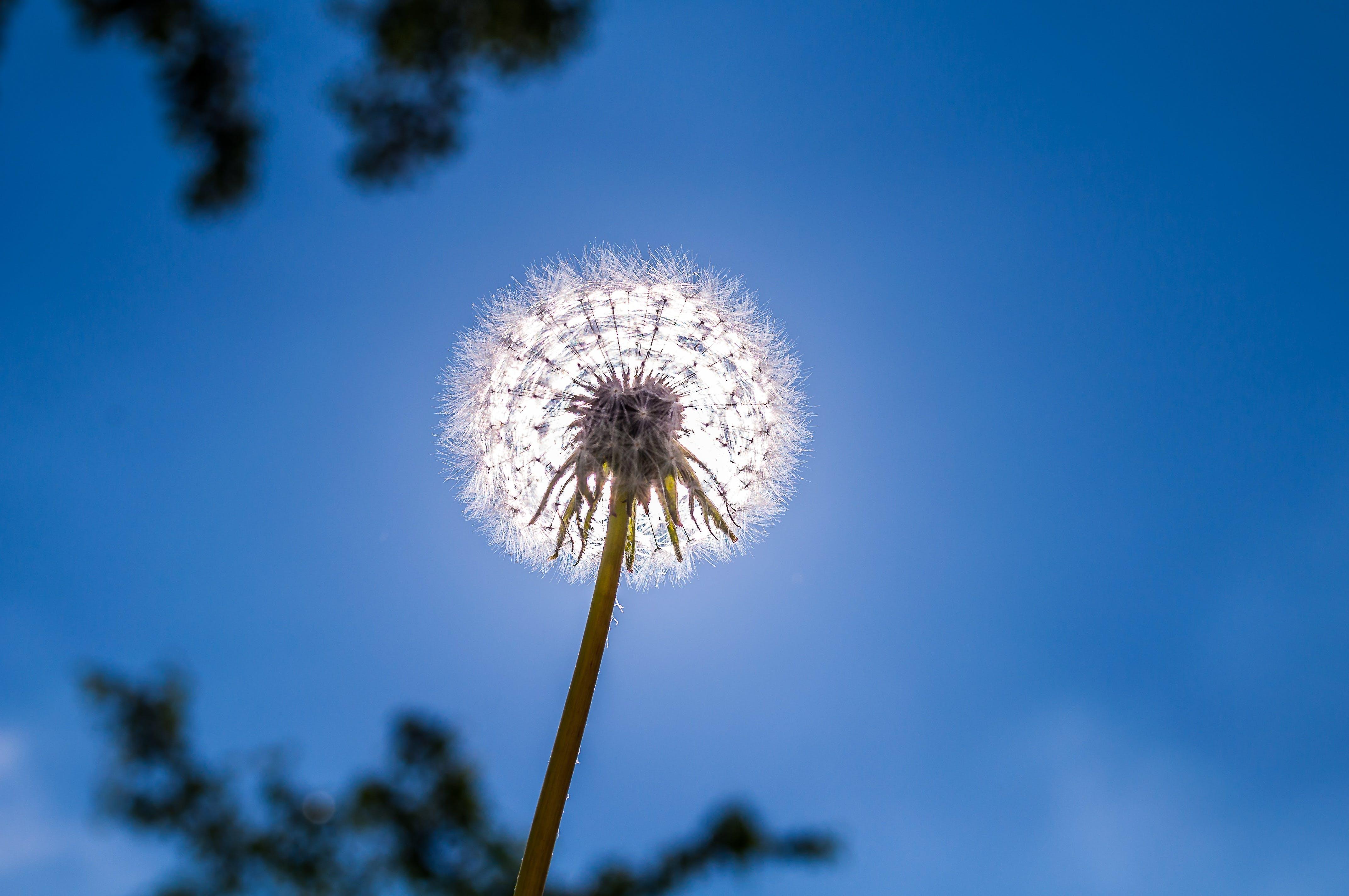 Foto d'estoc gratuïta de arbres, bonic, brillant, cel blau