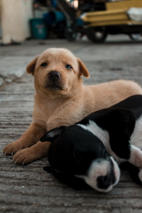 Cute purebred puppies lying on floor