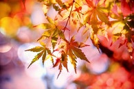 blur, leaves, autumn