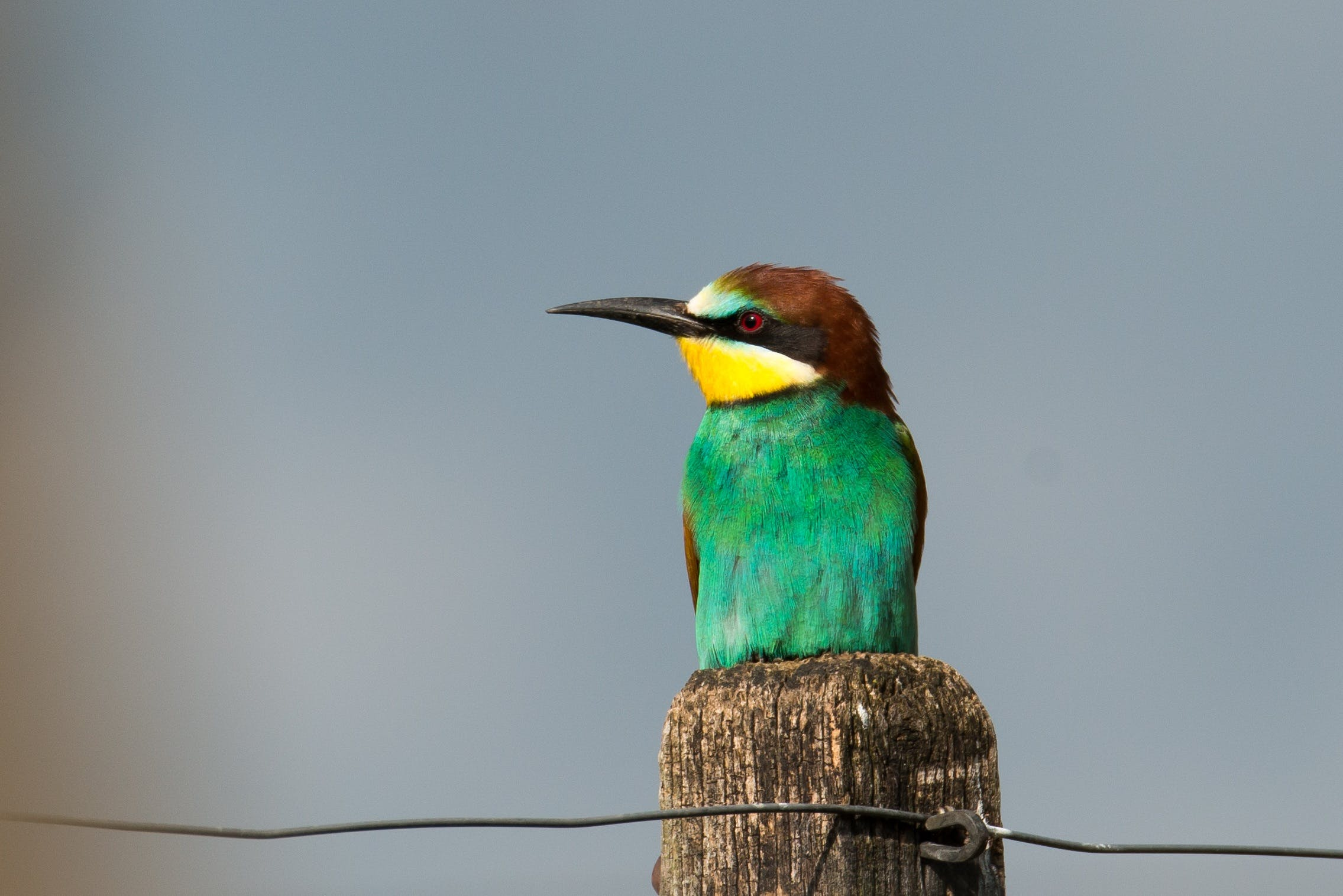 Green and Brown Bird Perching on Brown Pole