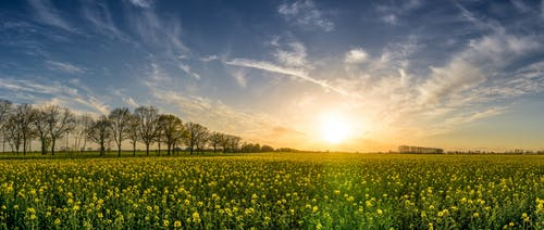 Immagine gratuita di agricoltura, alba, alberi, azienda agricola
