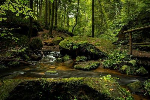 Imagine de stoc gratuită din apă, arbori, bancă, cascadă