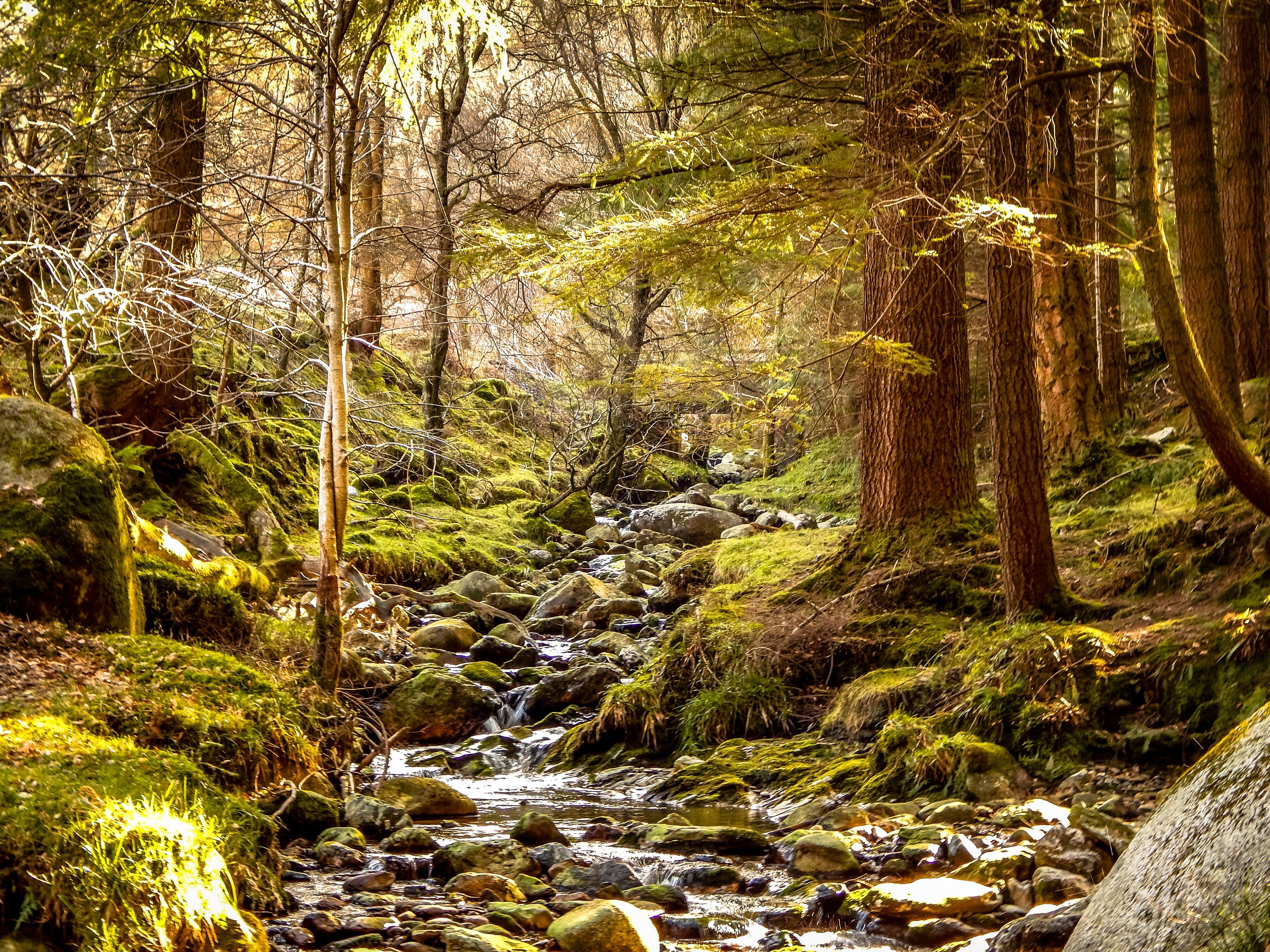 ağaçlar, ahşap, akarsu, çevre içeren Ücretsiz stok fotoğraf