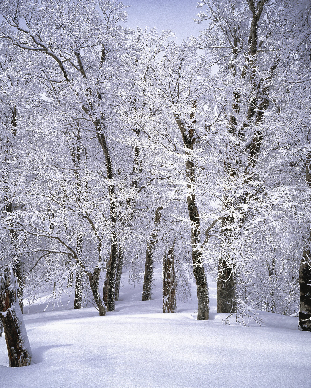 Foto stok gratis alam, badai salju, beku, cuaca