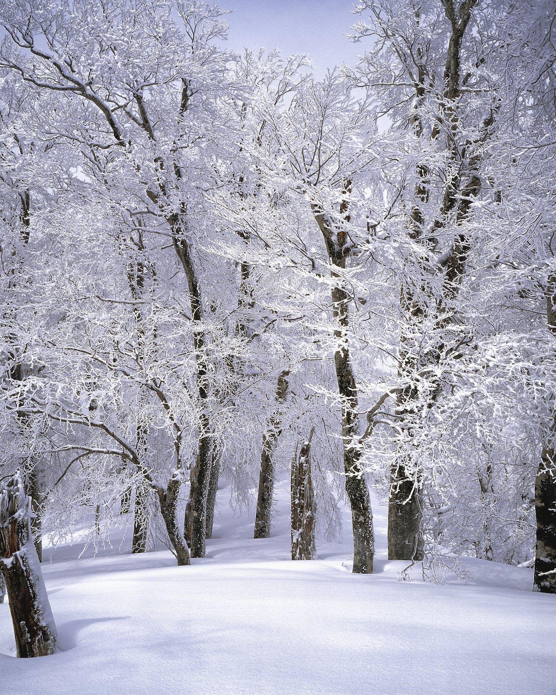 dream of snow, dream of snowing