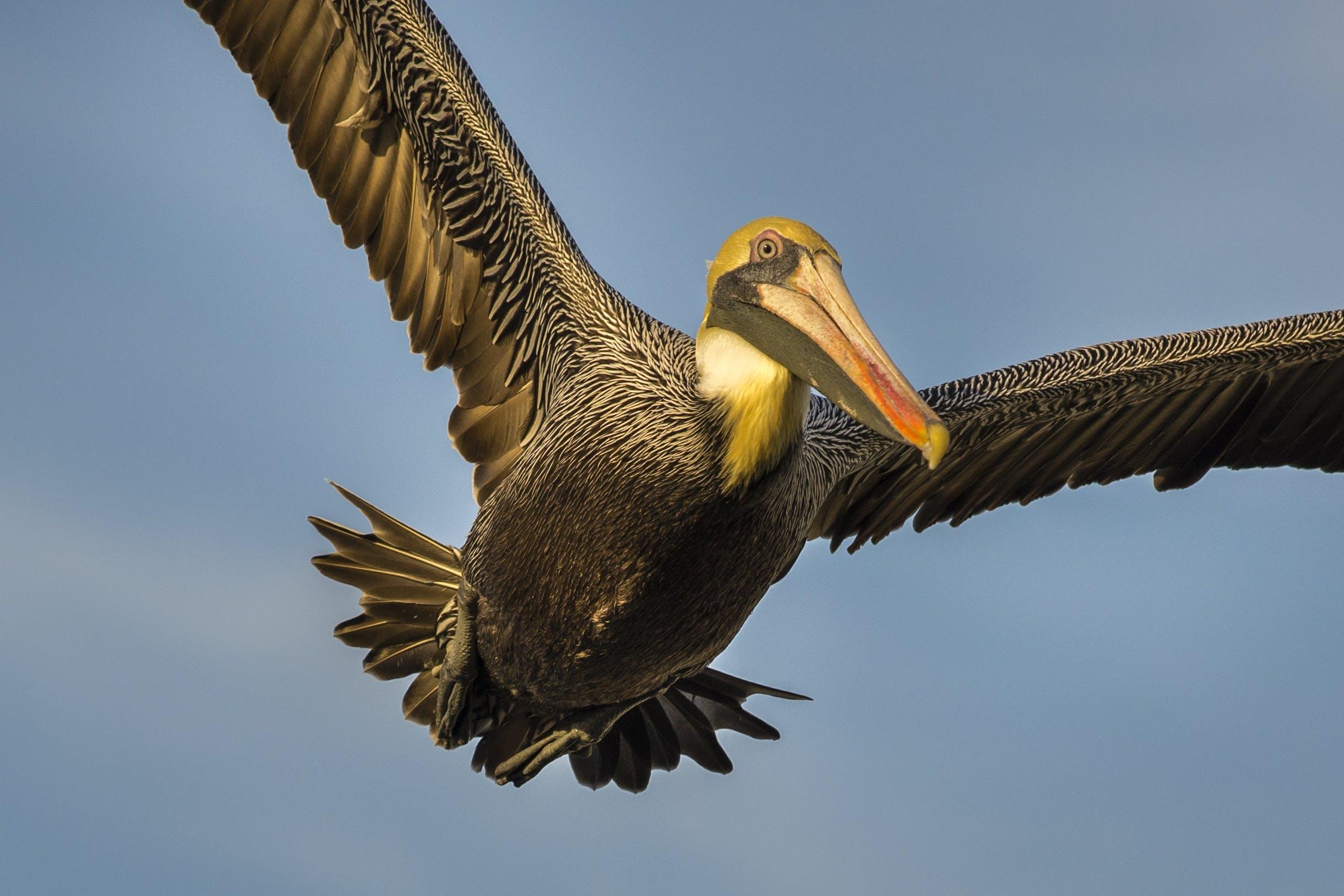 beak, bird, fly