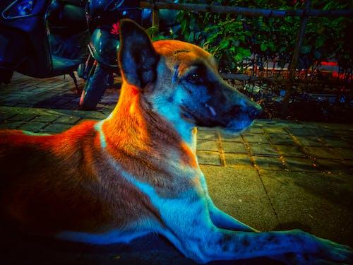 Free stock photo of #animal, #dog, animal, dog