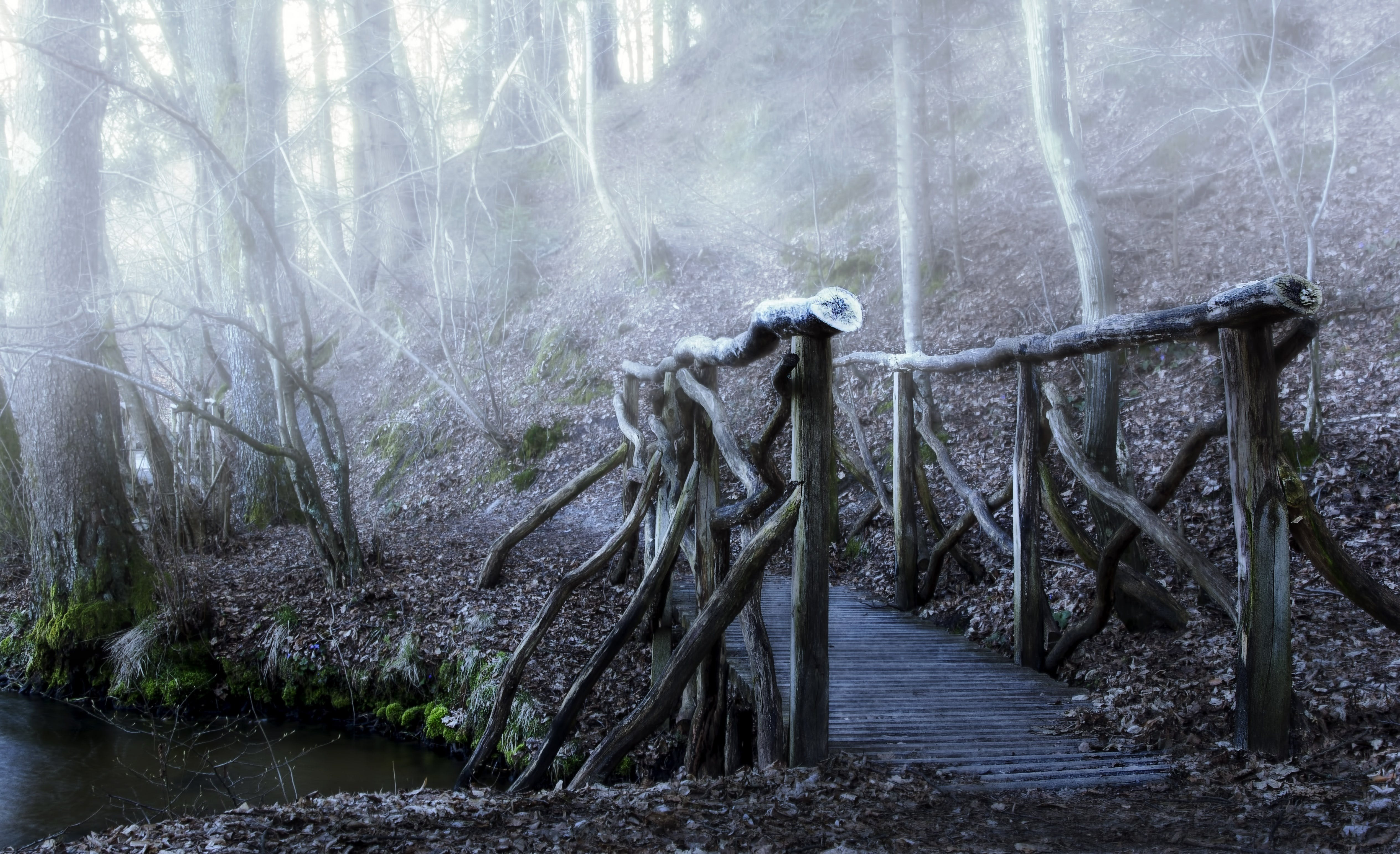 Free stock photo of forest, bridge, haze, color