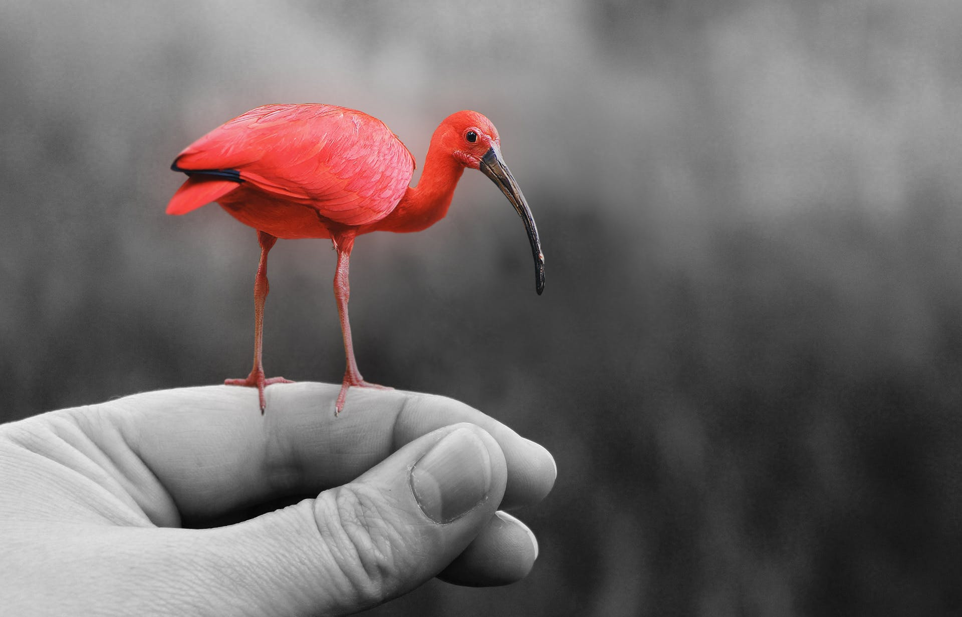 Free stock photo of nature, bird, red, hand