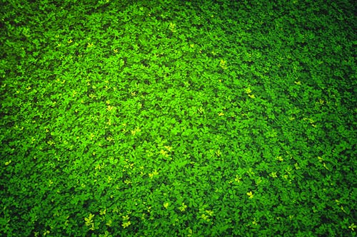 Free stock photo of garden, grass, green, leaves