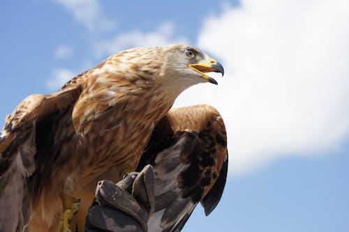 動物, 手套, 猛禽, 野生動物 的 免費圖庫相片