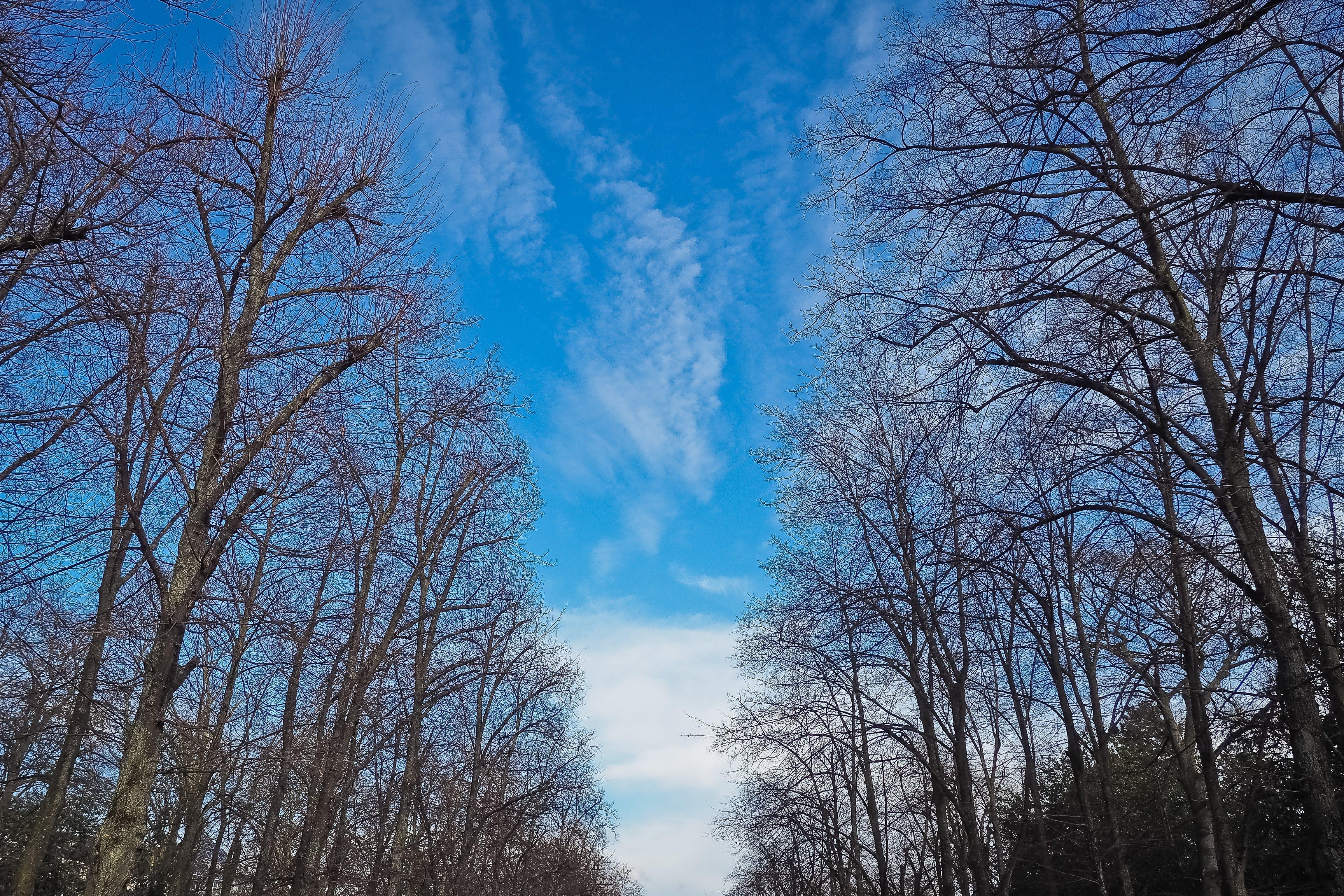 Безкоштовне стокове фото на тему «безтурботний, блакитне небо, гілки, гілки дерев»