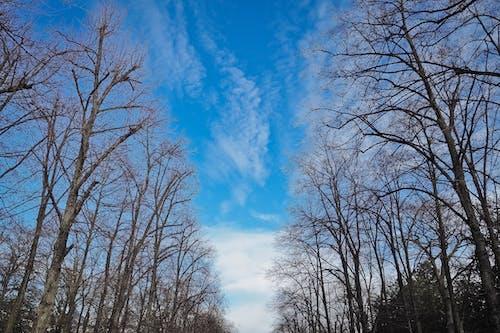 Gratis lagerfoto af blå himmel, fredelig, grene, himmel