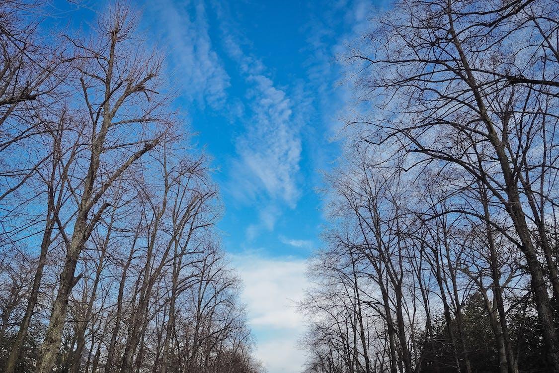 分支機構, 和平的, 天空