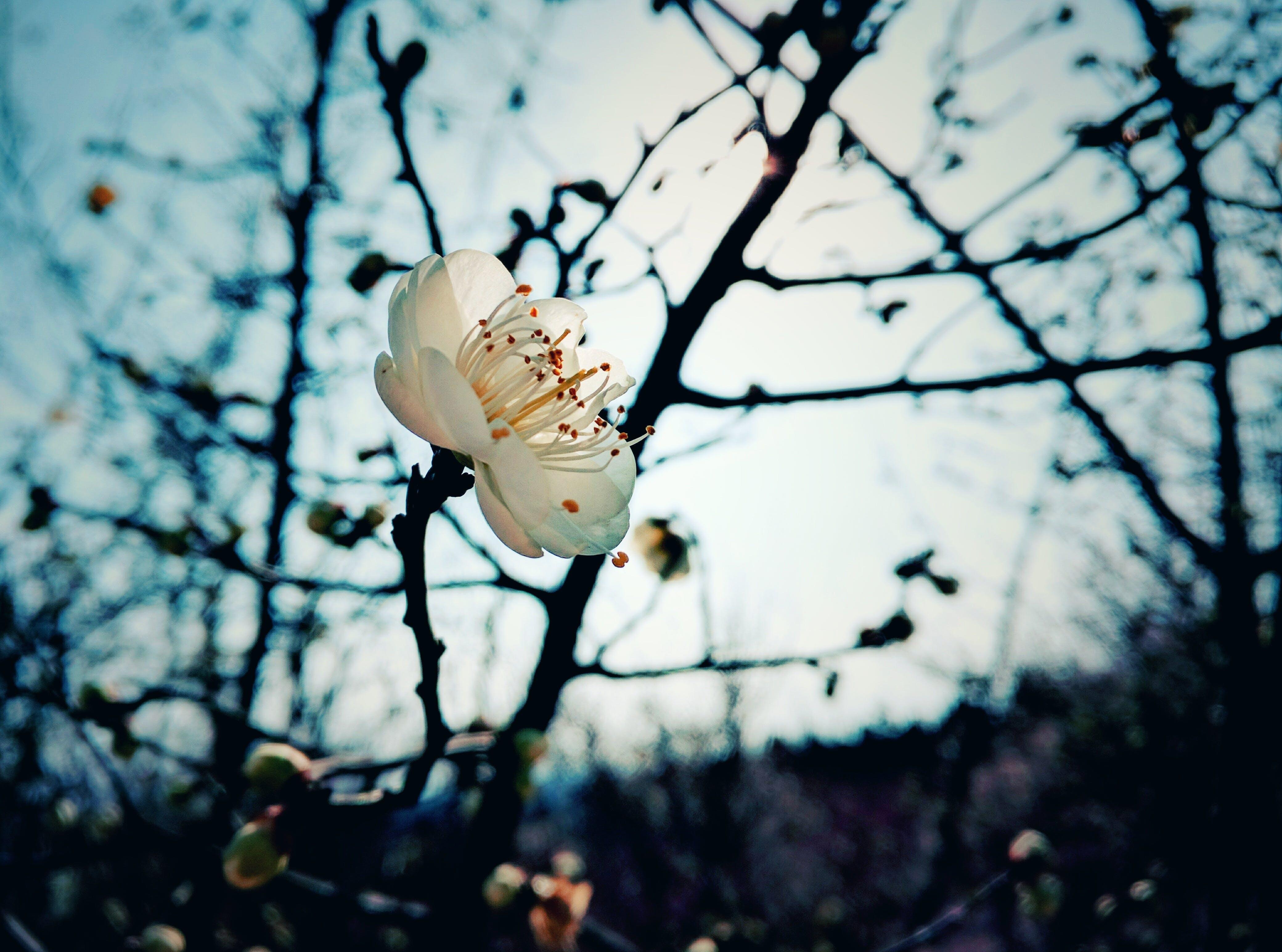Shallow Shot of White Flower