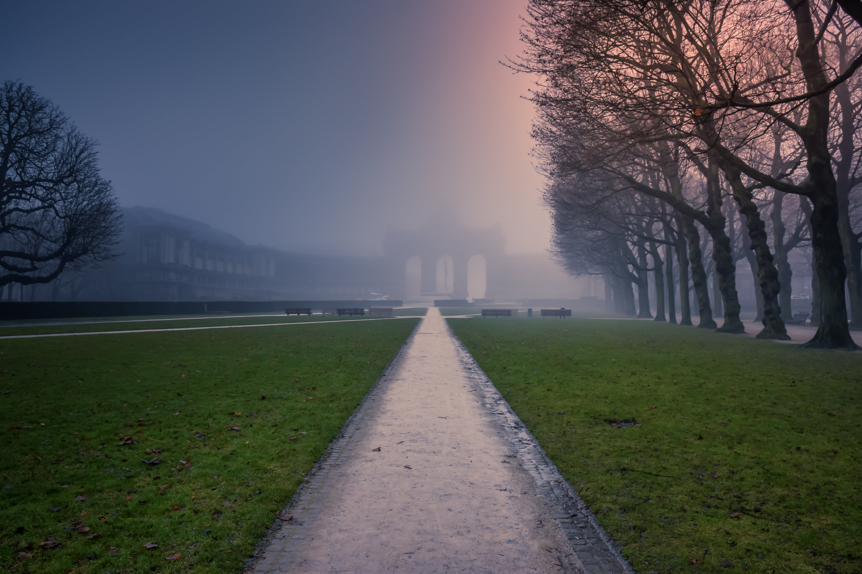 Free stock photo of nature, sun, sunrise, fog