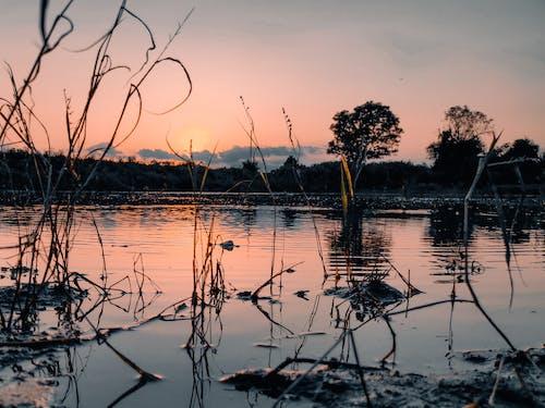 Gratis lagerfoto af aften, dam, solnedgang, vand