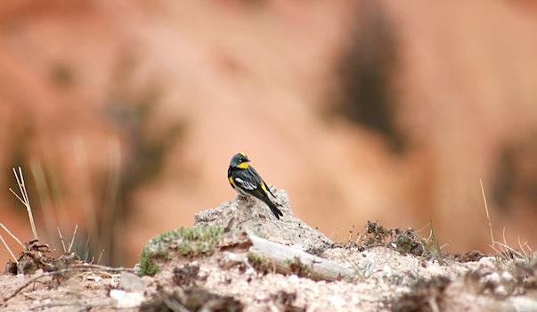 Free stock photo of nature, bird, colorful, usa